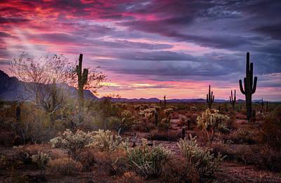 Photograph - Pink Sunshine At Dawn  by Saija Lehtonen
