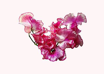 Photograph - Pink Sweet Pea Heart by Susan Savad