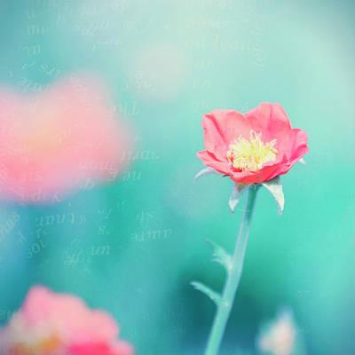 Flower Photograph - Pink Tender Flower 2 by Oksana Ariskina