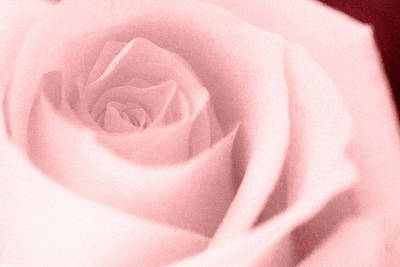 Photograph - Pink Textured Rose by Joni Eskridge