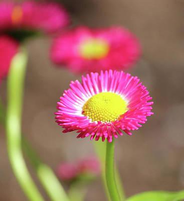 Photograph - Pink by Tiffany Erdman
