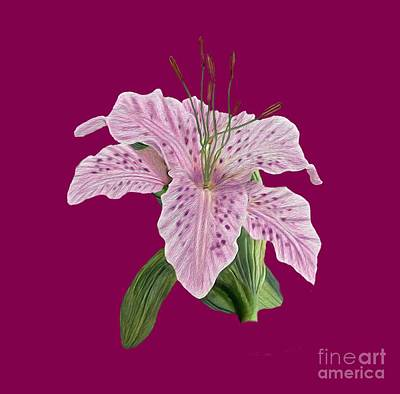 Digital Art - Pink Tiger Lily Blossom by Walter Colvin