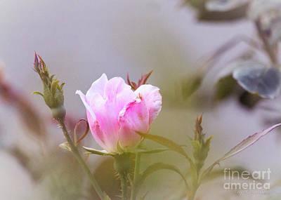 Photograph - Pink by Todd Blanchard