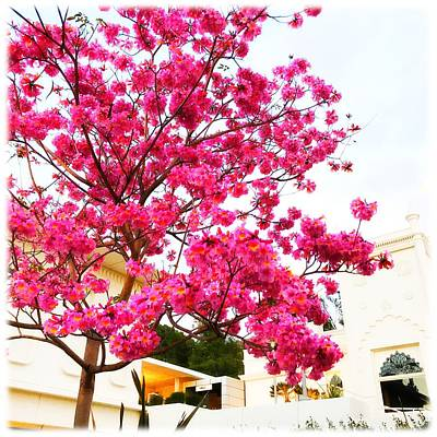 Photograph - Pink Tree by Sarah Vandenbusch