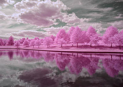 Creve Coeur Park Photograph - Pink Trees Reflecting by Allen Skinner