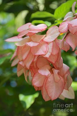 Photograph - Pink Tropical Dogwood Flower by Carol Groenen