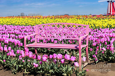 Photograph - Pink Tulip Bench by Louise Magno