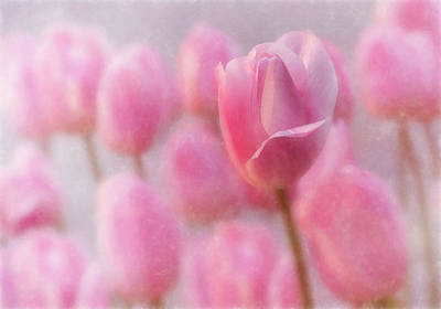 Photograph - Pink Tulip Crowd by Mary Jo Allen
