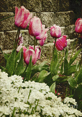 Photograph - Pink Tulip Garden by Jim And Emily Bush