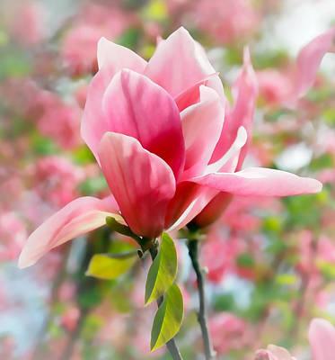 Photograph - Pink Tulip Tree Flower by Athena Mckinzie