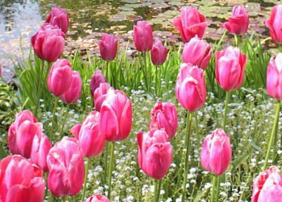 On Trend At The Pool - Pink Tulips by Peaceful Pond by Carol Groenen