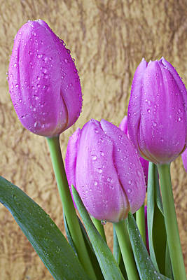 Colorful Leaves Photograph - Pink Tulips by Garry Gay