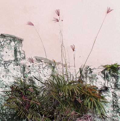 Photograph - Pink Wall by Ian  MacDonald