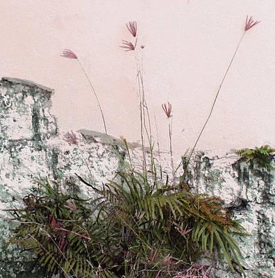 Photograph - Pink Wall by Ian  MacDonald