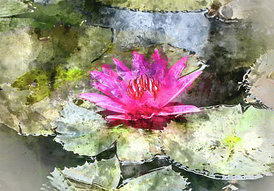 Photograph - Pink Water Lilly With Digital Art Watercoloring by Brandon Bourdages