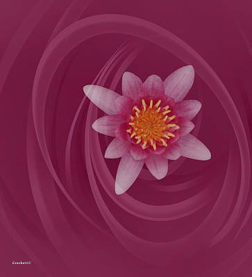 Photograph - Pink Water Lily On A Pink Background by Gary Crockett
