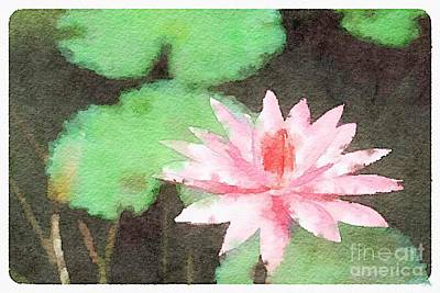 Photograph - Pink Water Lily On Black Pond by Rich Governali