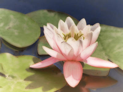 Photograph - Pink Water Lily - Photograph by Ann Powell