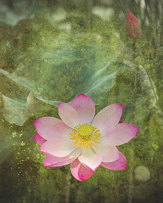 Photograph - Pink Water Lily by Sandra Ramacher