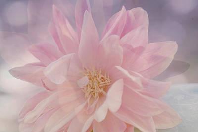 Petals Art Mixed Media - Pink Whisper by Bonnie Bruno