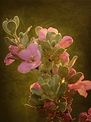 Photograph - Pink Wildflower by Charles McKelroy