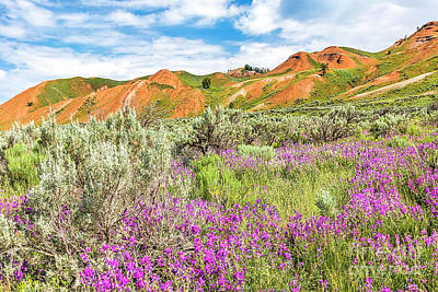 Antique Maps - Pink wildflowers, red hills by Daryl L Hunter
