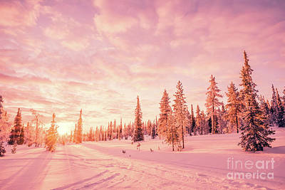 Photograph - Pink Winter by Delphimages Photo Creations