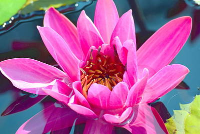Photograph - Pink Wonder by Deborah  Crew-Johnson