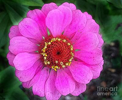 Digital Art - Pink Zinnia by Anne Sands