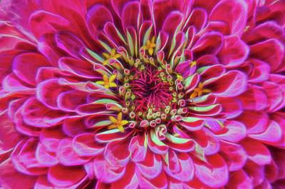 Photograph - Pink Zinnia Glow by Beth Sawickie