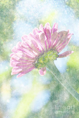 Photograph - Pink Zinnia On Bokeh Background by Jim And Emily Bush