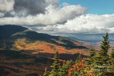 Photograph - Pinkham Notch Foliage by Sharon Seaward