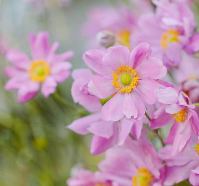 Photograph - Pinkness 4 by Fraida Gutovich
