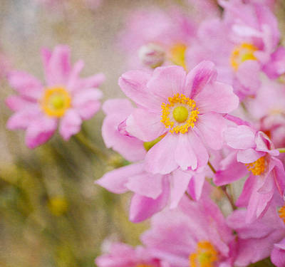 Photograph - Pinkness 5 by Fraida Gutovich