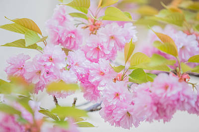 Photograph - Pinkness by Karen Saunders