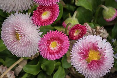 Bight Colors Photograph - Pinks Galore by Jon Berghoff