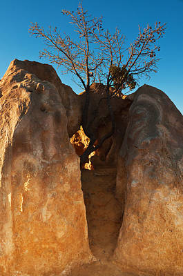 Desert Digital Art - Pinnacles Garden by Heather Thorning