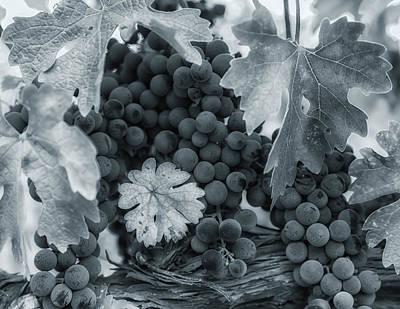 Photograph - Pinot 1 by Jonathan Nguyen