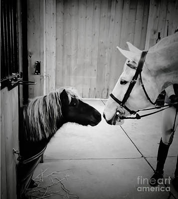 Photograph - Pint Size Love by Life With Horses