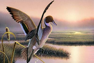 Daniel Pierce Painting - Pintail Duck-3rd Place Wi by Daniel Pierce