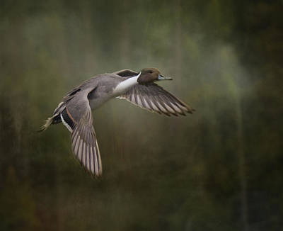 Photograph - In Flight by Marilyn Wilson
