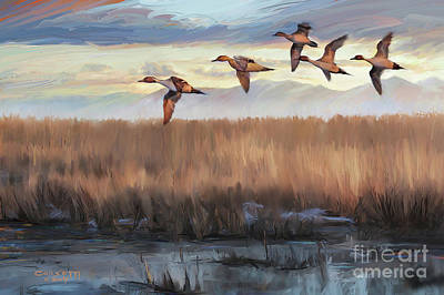 Painting - Pintail Fly By by Rob Corsetti