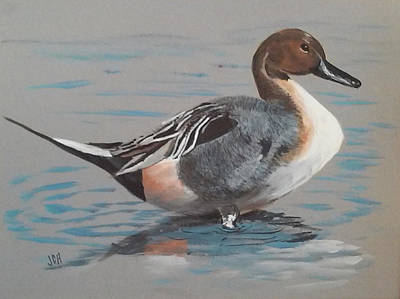 Painting - Pintail by Jean Ann Curry Hess