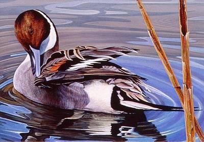Painting - Pintail Preening by Brian Durfee