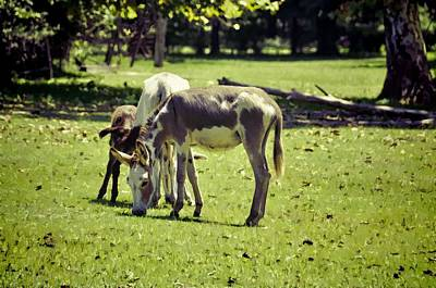 Photograph - Pinto Donkey I by Jan Amiss Photography