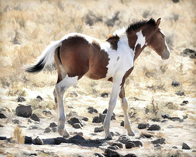 Photograph - Pinto Pony by Steve McKinzie