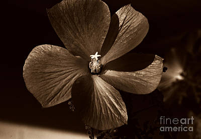 Photograph - Pinwheel by Clayton Bruster