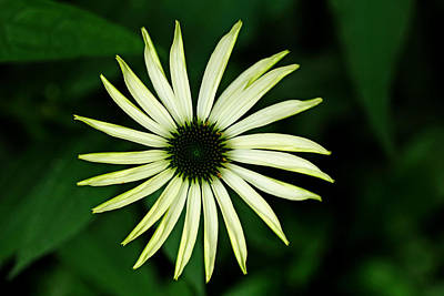 Photograph - Pinwheel by Debbie Oppermann