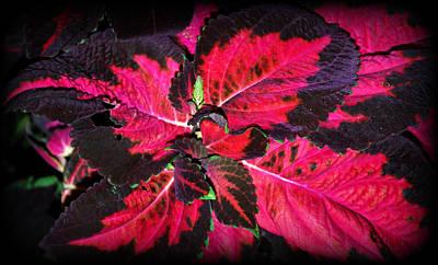 Photograph - Pinwheel by Mary Beth Landis