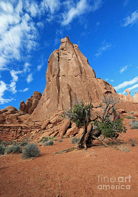 Photograph - Pinyon And Rock Tower by Mary Haber